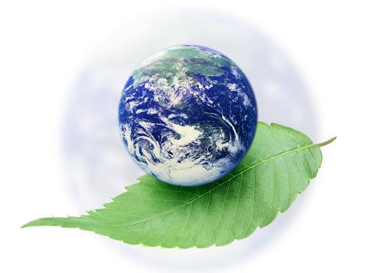 скачать презентацию по экологии: